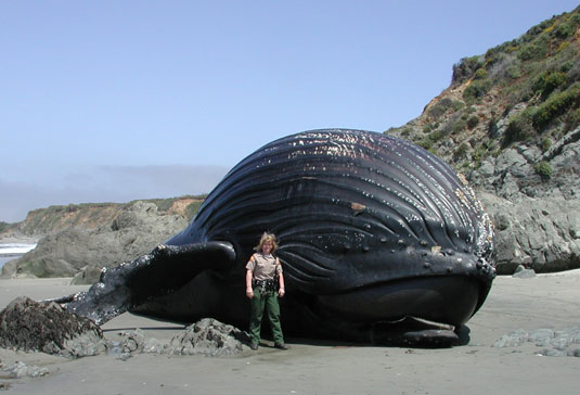 A Whale to the rescue: Can super-skimmer turn tide of Gulf oil spill?