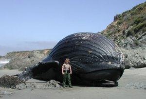 A fuzztoned whale